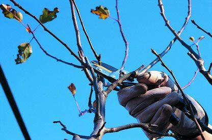 La potatura invernale, per proteggere le piante dal gelo.